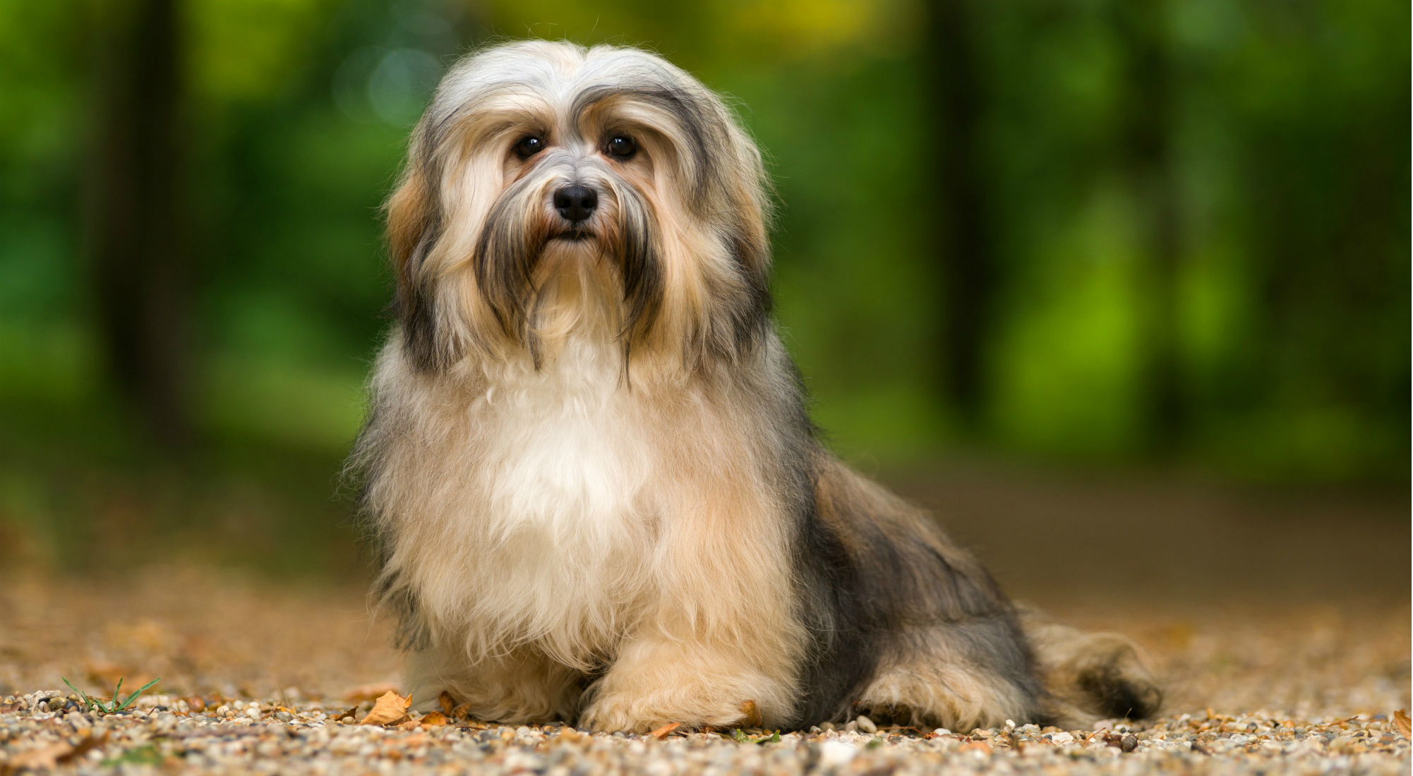 Breed Page – BetterBred com