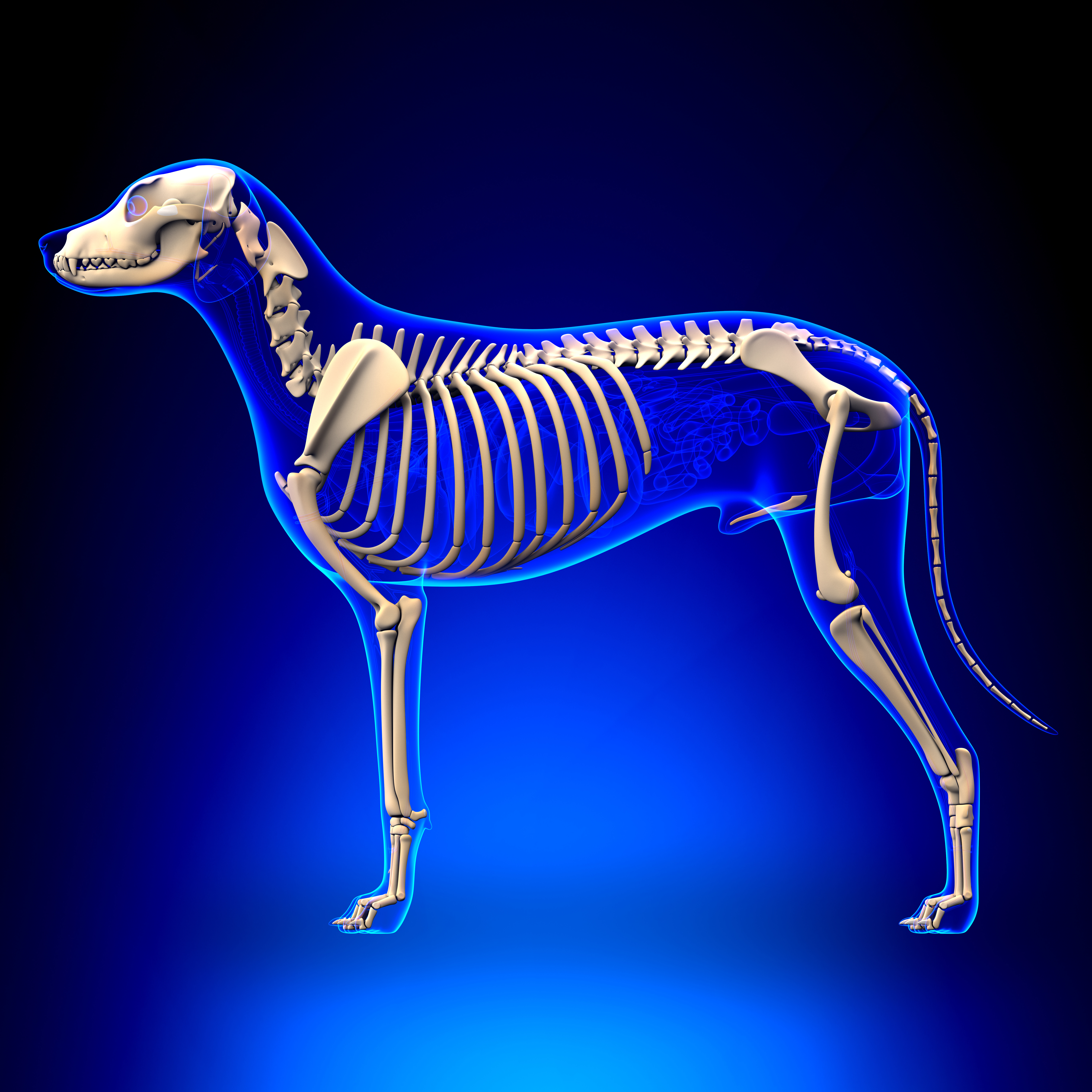 Guest Blog: The School of Canine Science Measuring System